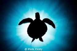 Turtle silhouette by Mark Pacey