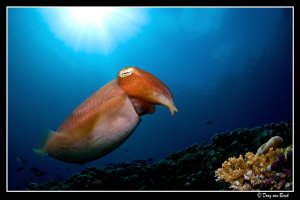 Cuttlefish... by Dray Van Beeck