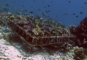 experimental coral plantation