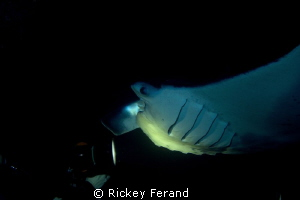 Manta Ray night dive - Kona, Hawaii by Rickey Ferand