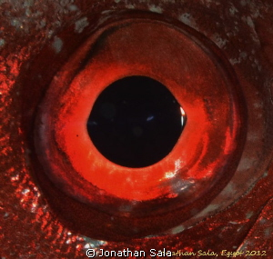 EYE of a Crescent-tail bigeye by Jonathan Sala