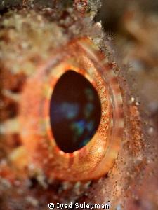 Eye of Scorpion-fish by Iyad Suleyman