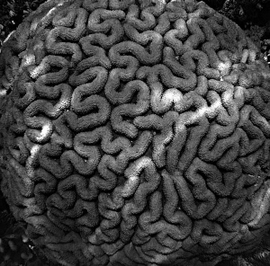 brain coral maze by Chris Krambeck