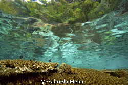 A healthy reef top in Misool, Irian Jaya - West Papua - I... by Gabriela Meier
