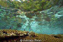 A healthy reef top in Misool, Irian Jaya - West Papua - I... by Gabriela Meier