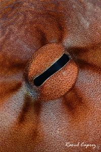 Octopus eye by Raoul Caprez