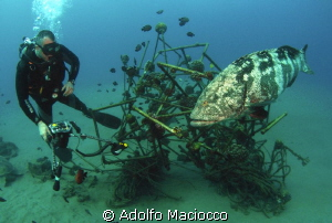 Giant grouper with Diver @ Naama bay