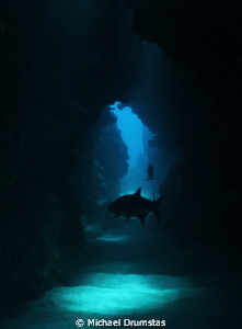caves with tarpon by Michael Drumstas