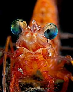 """""""Shrimp"""" by Henry Jager"""