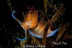 piccolo nudibranco by Elena Li Pera