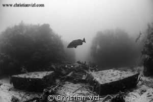 Big Grouper hovering above a shipwreck located between th... by Christian Vizl