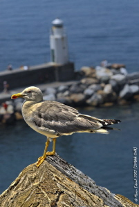 The lighthouse keeper....(Camogli, Liguria, Italy). by Marco Faimali (ismar-Cnr)