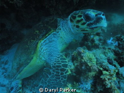 my first trip to the red sea using my fantasea big eye le... by Daryl Parker