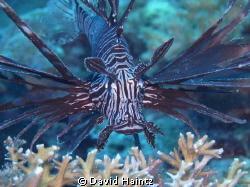 Alona Beach house reef, Bohol. Shore dive, depth around 1... by David Haintz