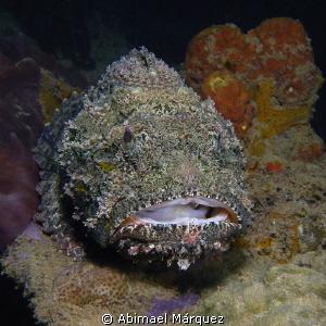 Scorpionfish-1 by Abimael Márquez