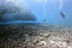 Fishball w/divers-Lau Lau Bay, Saipan M.P. by Martin Dalsaso