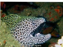 its a wreck dive,golf of oman, 100 feet..using ge gx5 cam... by Clariza Tagaro