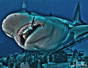 A little fun with HDR and a lot of shark feeding. This im... by Steven Anderson