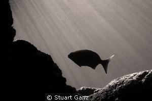Solo by Stuart Ganz