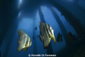 Under the jetty by Marcello Di Francesco