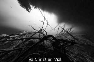 Sunken roots in the cavern area, a common site at cenote ... by Christian Vizl