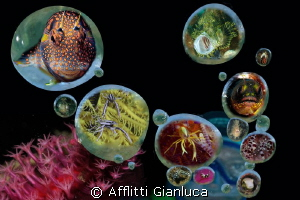 bubbles by Afflitti Gianluca