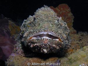 Scorpionfish-2 by Abimael Márquez