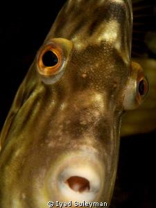 """""""Lozenge Filefish"""" Portrait by Iyad Suleyman"""