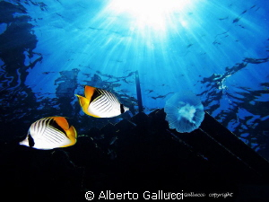 Under the jetty of Ras Umm Sid by Alberto Gallucci
