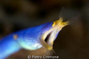 Blue ribbon bokeh by Pietro Cremone
