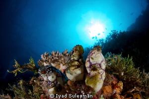 Reefscape by Iyad Suleyman