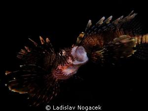 night dive at LH by Ladislav Nogacek