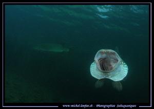 Big Pike Fish yawning ;O)... by Michel Lonfat
