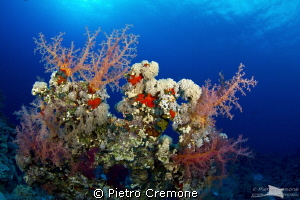Reefscape by Pietro Cremone