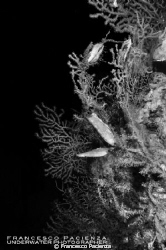 Underwater mediterranean life. by Francesco Pacienza