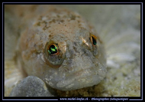 Face to face with this beautiful Bullhead, freshwater scu... by Michel Lonfat