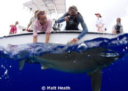 This is a shot of a research group tagging an Oceanic Whi... by Matt Heath