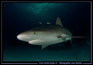 Reef Shark near Tiger Beach... :O)... by Michel Lonfat
