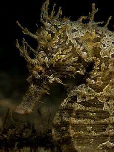 Hippocampus by John Roach