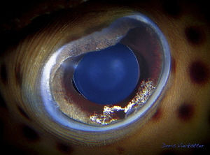 blue eye by Doris Vierkoetter