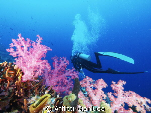 soft coral by Afflitti Gianluca