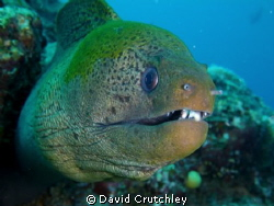 This Moray became very curious and just got closer  ! by David Crutchley