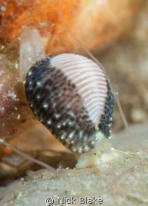 On the move! Dive at Selsey Lifeboat Station, UK taken w... by Nick Blake