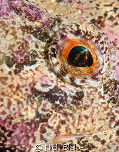 Scorpion Fish Close Up. Selsey Lifeboat Station, UK. by Nick Blake