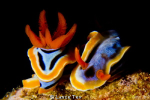 When Two becomes One? by Lance Teo