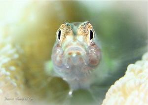 little cute by Doris Vierkoetter