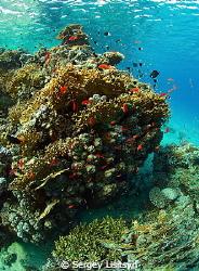 Reef Marsa Alam. by Sergey Lisitsyn