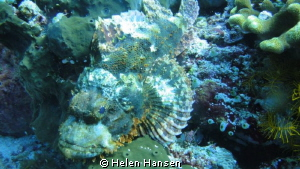 stonefish by Helen Hansen