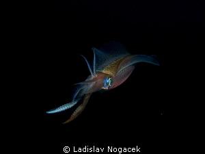 sqeed at night by Ladislav Nogacek