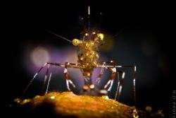 """""""Spotlight""""  Cleaner Shrimp portrait taken in Tulamben ... by Moritz Drabusenigg"""